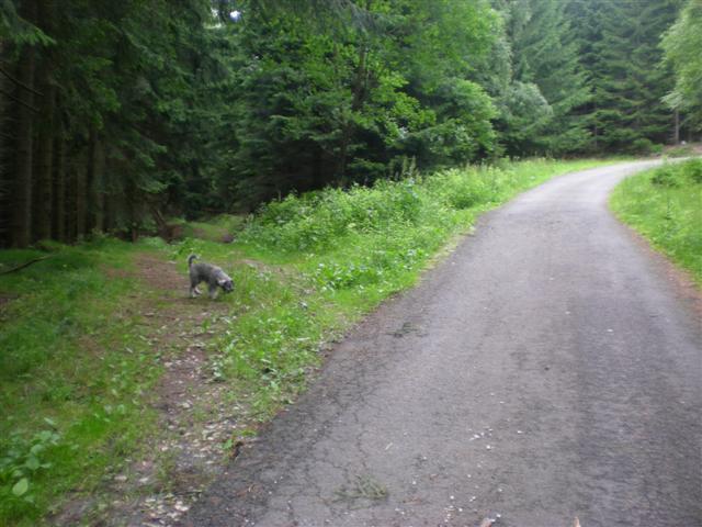 -= K�i�ovatka asfaltky a lesn� cesty =-